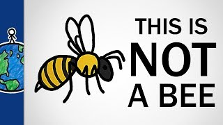 this is not a bee