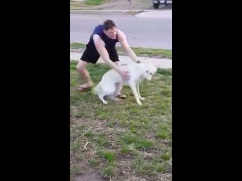 Soldier returns home Excited dog greets him