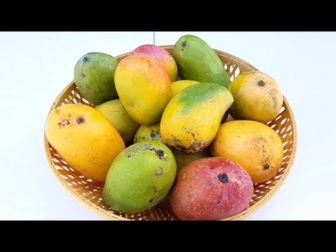Popular Varieties of Mangoes In The Market: An Easy Guide