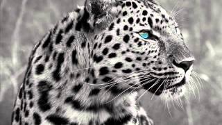 Edu Imbernon & Los Suruba feat. Daniel Wilde - Leopard (Sascha Braemer & Dan Caster Remix)