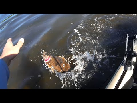 Cyber Flounder at Miguel Bay Tampa Bay FL