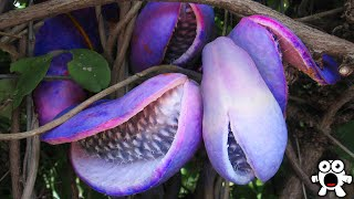 Exotic Rare Fruits You Should Try If You Get the Chance