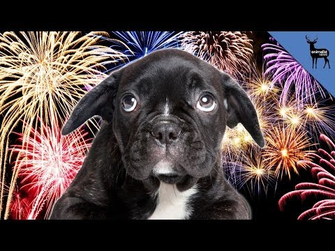 How To Calm Your Pets During Fireworks