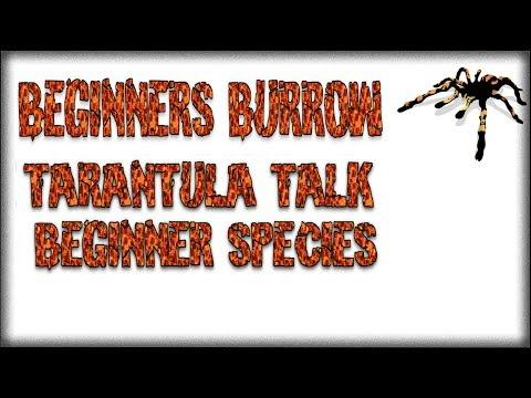 Tarantula Talk EP 1 - Beginner Burrow