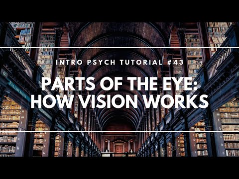 Parts of the Eye: How Vision Works (Intro Psych Tutorial #43)