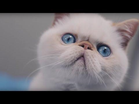 Catspiracy 2: Digging Deeper into the PetSafe ScoopFree Poop Harvesting Machine (Uncensored)