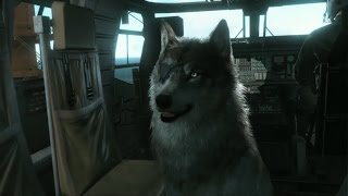 Metal Gear  Solid 5 - Buddy Guide: D-dog