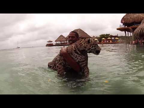 Little French Key, Roatan, Honduras - Swimming with a Jaguar!