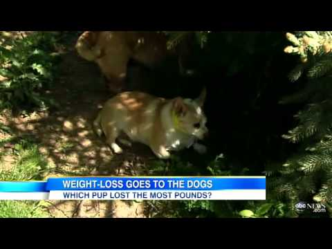 Doggie Fat Camp: Putting Dogs on a Diet, Getting Them to Exercise