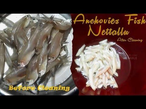 How to Clean and Wash Anchovies Fish Nettallu ?(నెత్తల్లు శుభ్రపరచడం ఎలా ?)