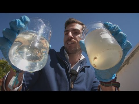 'Electric' bacteria can purify sewage water - fast