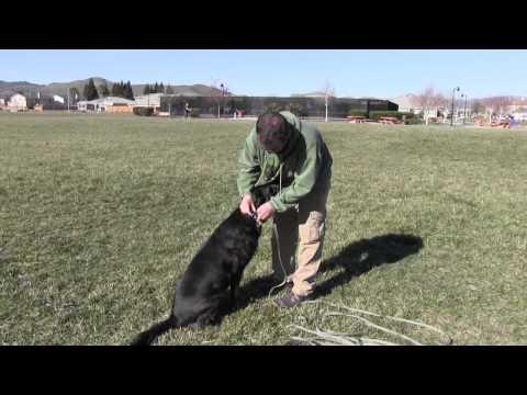Dog Training: Fetch - Improving the Retrieve - Thriving Canine