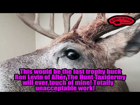 Taxidermy Near Me - After The Hunt Taxidermy Ron Deer Shoulder Mount