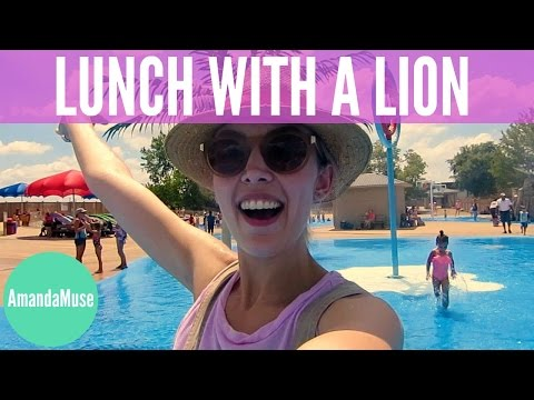LUNCH WITH A LION | Week 106 | AmandaMuse