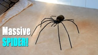 BIGGEST SPIDER EVER?!