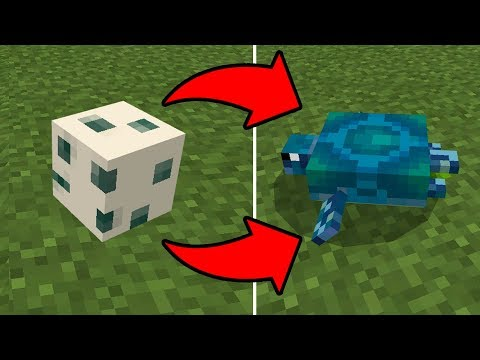 How to HATCH the Turtle Egg in Minecraft PE