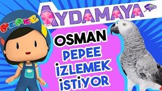 Osman Pepee İzlemek İstiyor - Aydamaya - Düşyeri