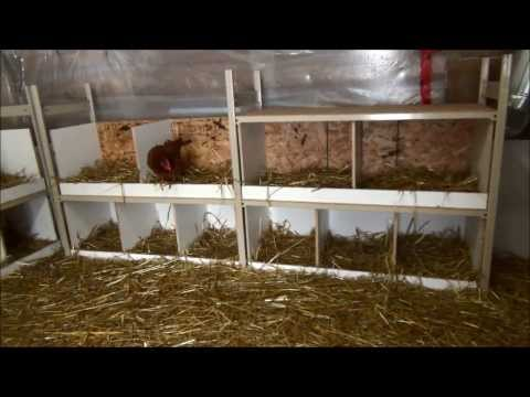 Did The Ducks Like The Nesting Boxes I Built? Did They Use Them? #68 Breeding Ducks
