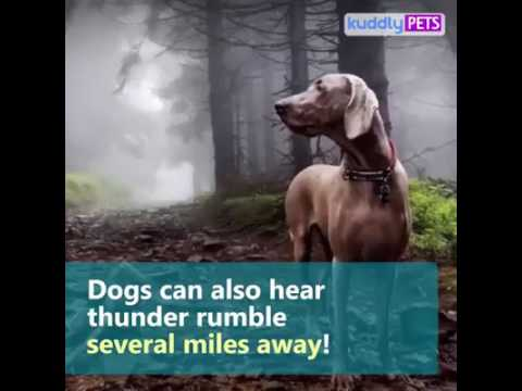 5 Things Dogs can sense Before they Happen!!!  2017
