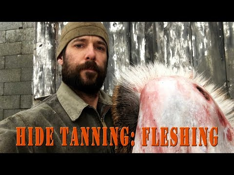 Hide Tanning - How to flesh a deer Hide for making leather, rawhide, or buckskin.