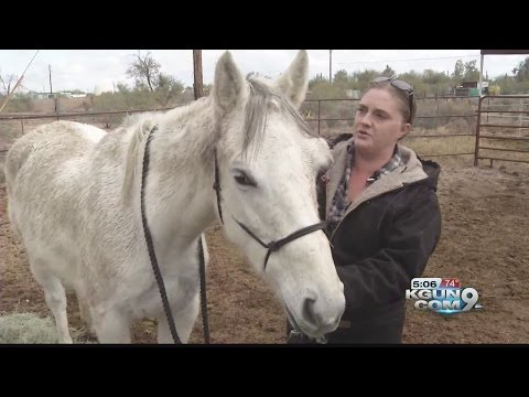 Injured horse put to sleep, donations turned to reward