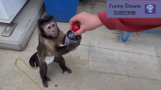 🌟🔷Funny Clever Animals Compilation🔷🌟 - Ultimate Funny Intelligent Animals