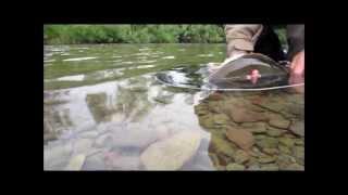 Ison harjuksen kalastusta - Fishing for Big Grayling