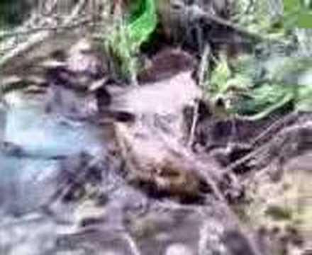morel mushroom hunting in missouri