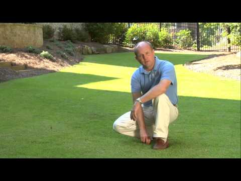 What type of grass is best for your lawn? Unlimited Landscaping Video Blog