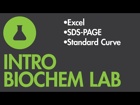 Creating an SDS-PAGE Molecular Weight Standard Curve in Excel