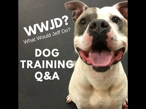 #416 Stop humping dog | Stop Dog barking | What Would Jeff Do? Q&A Dog Training