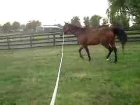Severe Head Shaking Horse