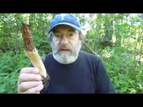 Paul Stamets in FP's cultivated morel patch June 2 2011