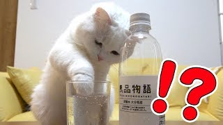 Download 炭酸水を見るとついつい手を突っ込んじゃう猫! Video
