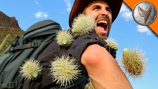Download EXTREME Cactus Attack! Video