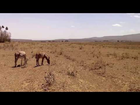 Video of one acre land for sale in Mai Mahiu Kenya