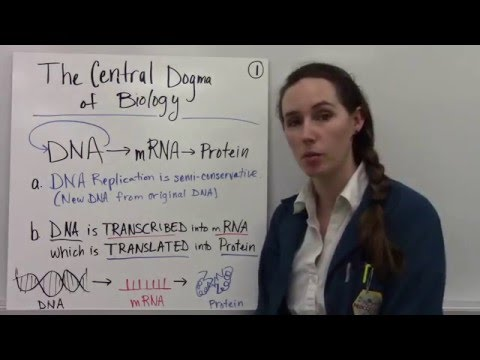 Central Dogma of Biology Part 1 - Intro and Transcription