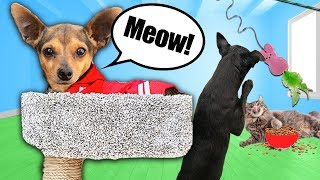 Treating Our Dogs Like Cats For 24 HOURS!  PawZam Dog Rescue