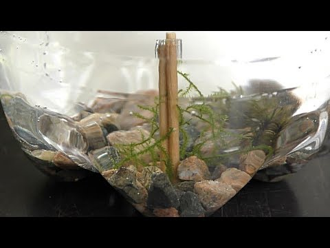 Driftwood Toothpicks for Aquarium DIY