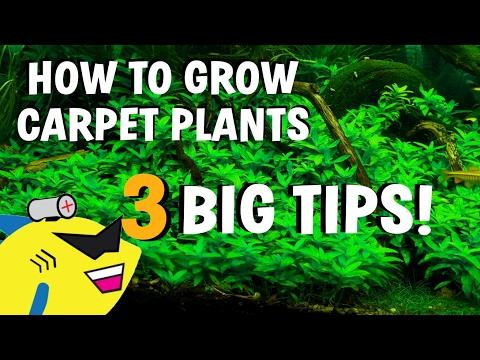 3 AQUARIUM CARPET PLANT TIPS! How To Grow Carpeting Plants BETTER