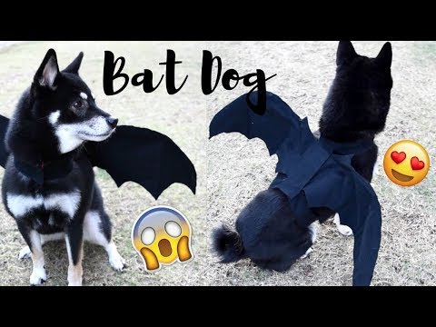DIY Bat Costume for your Dog! | Halloween 2017