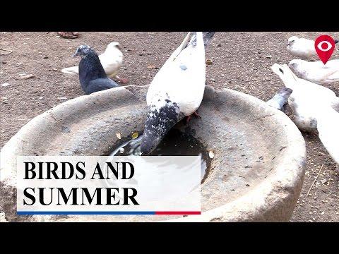 Plight of birds in Summer   Civic   Mumbai Live