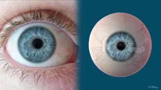 Lightweight Eye Capture Using a Parametric Model