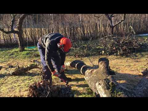 Cutting up an old apple tree with the Stihl MS 271.