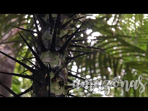 brazil episode three   the amazon rainforest and manaus   eleanor.