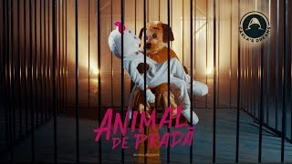 Download Carla's Dreams - Animal de Prada | Official Visualizer