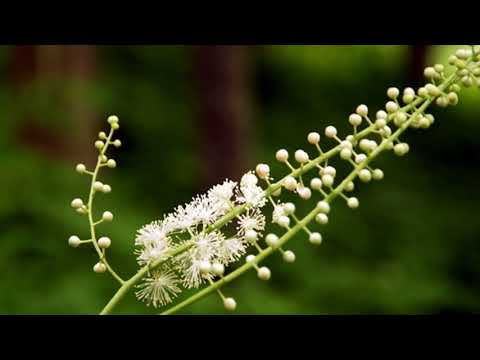 Role Of Vitamin E, Black Cohosh, Herbs For Menopause- Home Remedies For Menopause