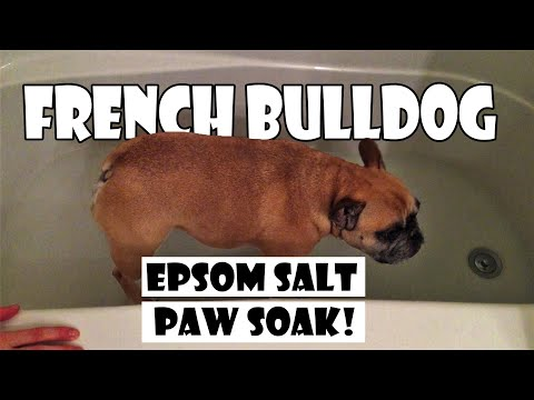 How To: French Bulldog Epsom Salt Bath Soak