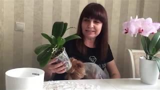 Как Одну Орхидею Превратить в Две ?)