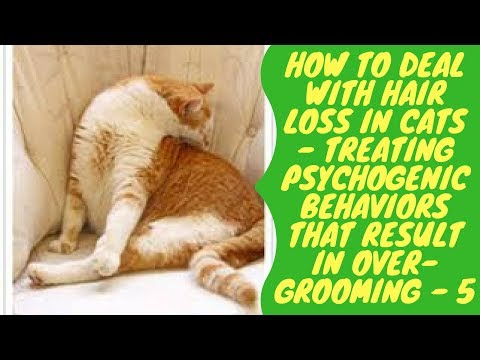 How to Deal with Hair Loss in Cats - Treating Psychogenic Behaviors that Result in Over Grooming - M
